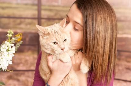 λογοι για να παρεις γατα